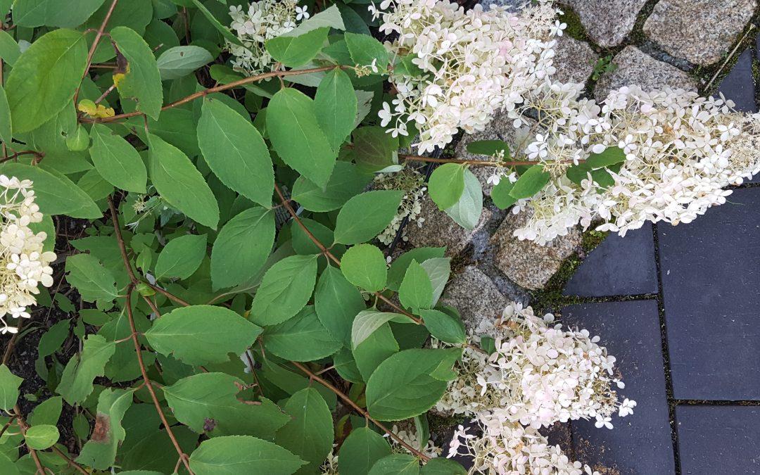 Plantekjøp og garanti