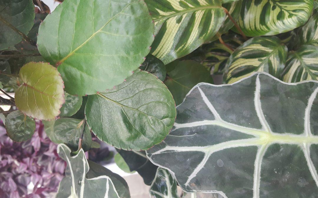 Stort utvalg i grønne  planter